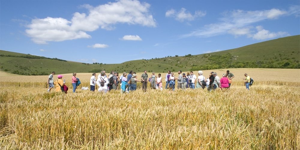 Our crop circle coach tour is back!